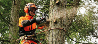 Skilled Bristol Tree Surgeons