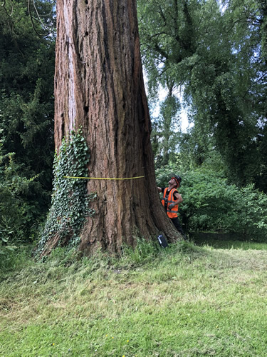 Bristol  Domestic & commercial Tree Surveys