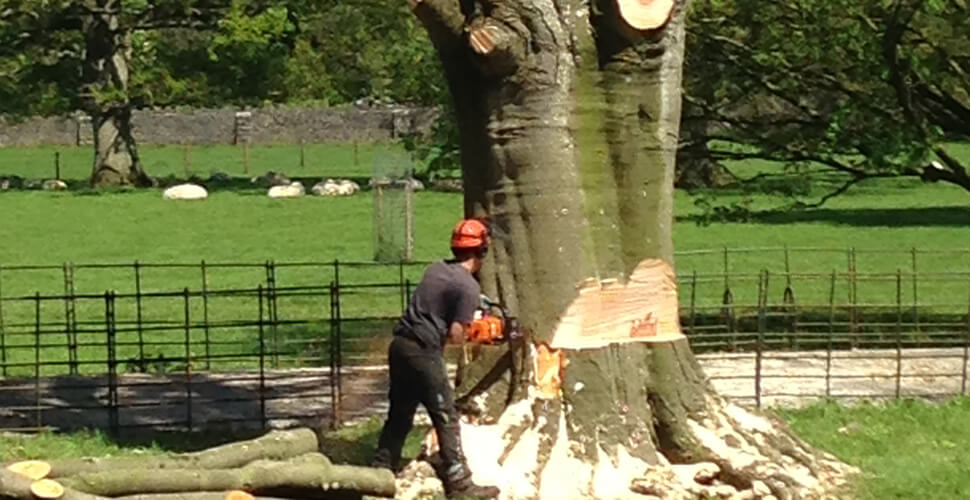Bristol tree removal,
